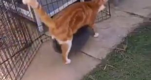 Rabbit and Cat viral Video
